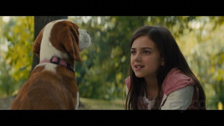 """Résultat de recherche d'images pour """"a dog's journey dvd review"""""""