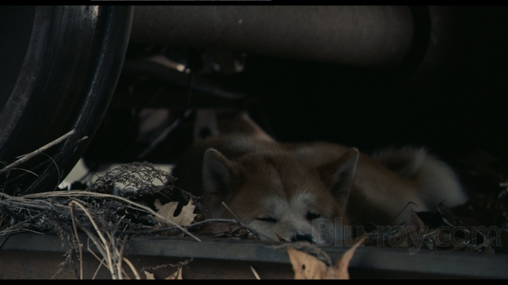 Hachi A Dogs Tale Is A Touching Family Drama Thats Not Always Easy To Watch For Its Elements That Are At Once Both Heartbreaking And Heartwarming
